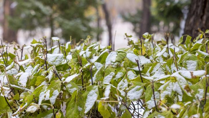 Первый снегопад в Красноярске — в объективах NGS24.RU