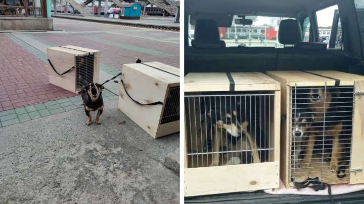 «Сказали, что хозяйку увезли в психушку»: в Новосибирске на перроне бросили пять собак в клетках