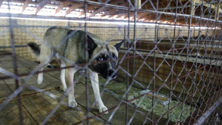 Волгоградцы потребовали у Владимира Путина защиты от агрессивных бездомных собак