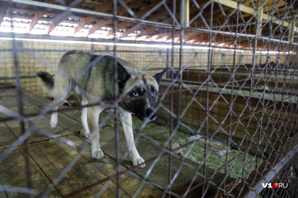 Пропавшая домашная собака заразилась бешенством