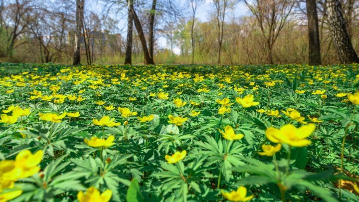 Нежная зелень и буйный цвет: гуляем по весеннему Ботаническому саду