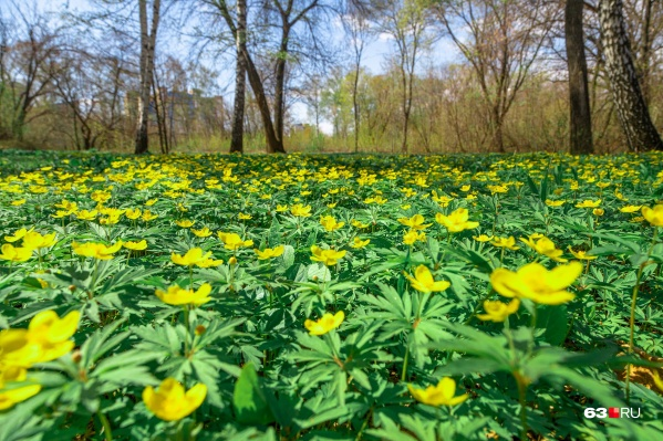 Ботанический сад — островок зелени посреди города
