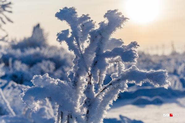 Морозы продолжатся на следующей неделе