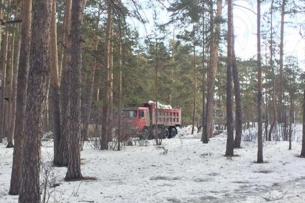 КАМАЗ вывалил снег прямо в городском бору, хотя для этого в конце прошлого года открыли специальную площадку