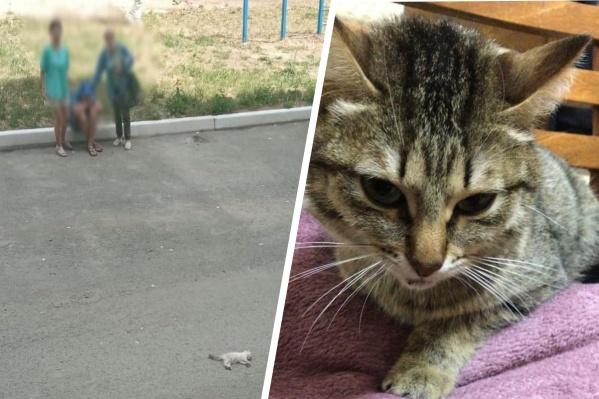 Котенок погиб, а кошка выжила. Сейчас ее обследуют ветеринары