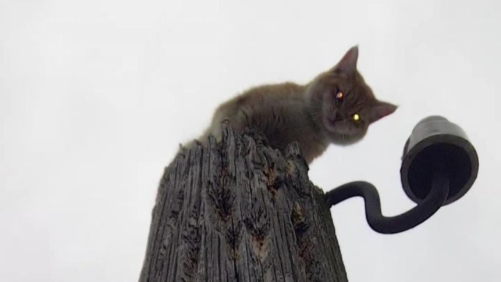 В Екатеринбурге спасли кота, которого собаки загнали на верхушку столба линии электропередачи