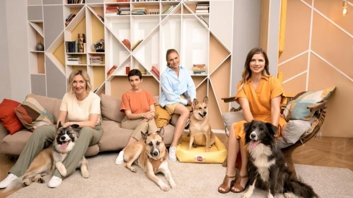 Pedigree и Настя Задорожная запустили новый сезон подкаста для тех, кто хочет взять собаку домой