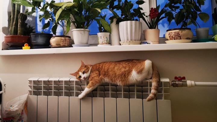 Власти назвали дату, когда отключат отопление в Ярославле