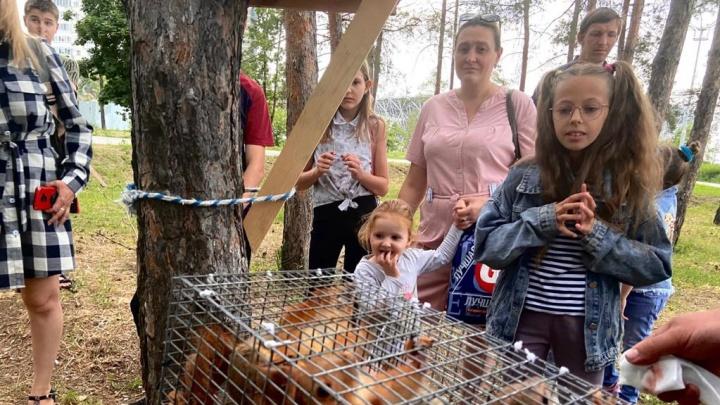 «Главное, чтобы они прижились»: в волгоградском ЦПКиО в день защиты детей поселили белок