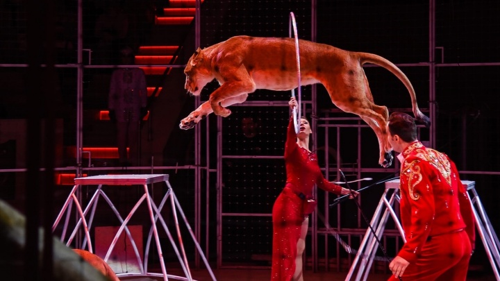 Сделавшие прививку пермяки могут получить сертификат в цирк