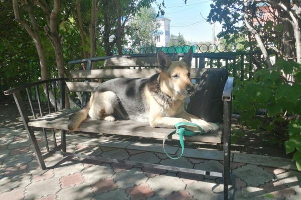 Собаку зовут Раза, ей 4 года