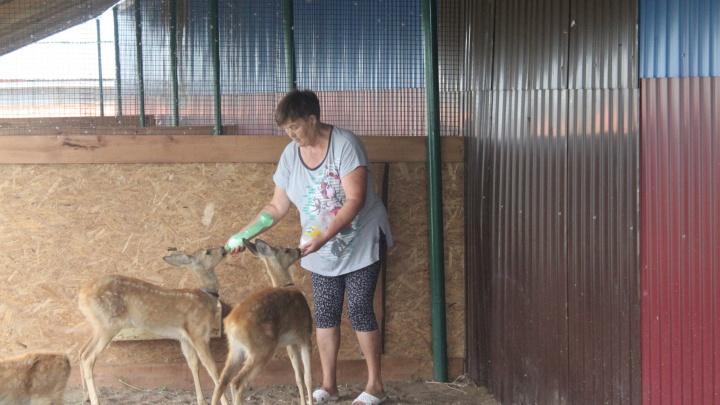 Принесли истощенными: Самарский зоопарк приютил трех косуль