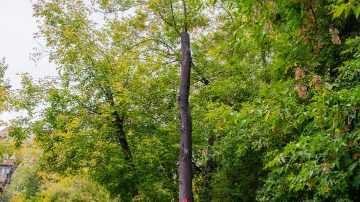 В Перми из-за реконструкции сетей водоснабжения вырубят 116 деревьев