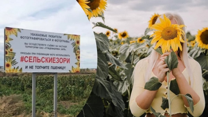 «Пшеницу вытаптывают»: птицефабрика под Красноярском установила для любителей фотосессий интересный плакат