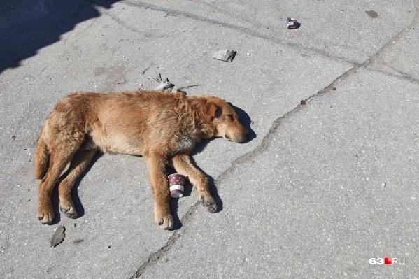 Бродячие собаки — одна из проблем крупных городов