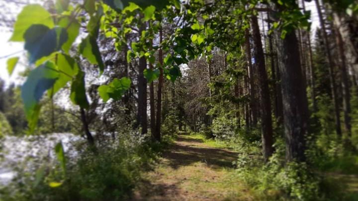 Жителям Архангельской области снова разрешили ходить в лес