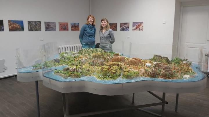 Увидеть Австралию, не покидая Архангельск: два учителя создали целый материк своими руками