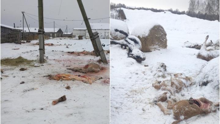 Тюменскую ферму закрыли на месяц из-за свалки трупов животных