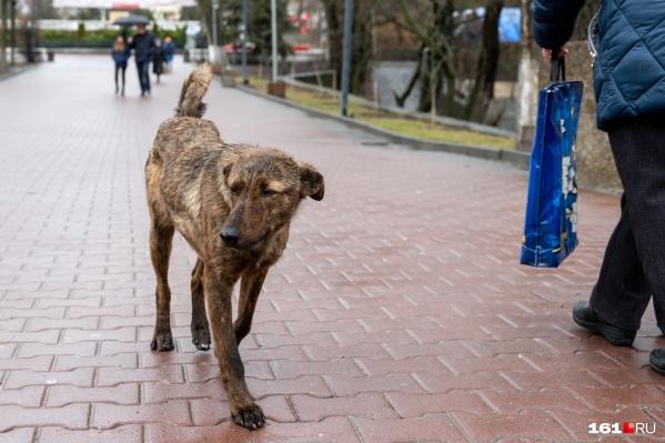 От такого прогноза расстраиваются даже четвероногие жители Ростова