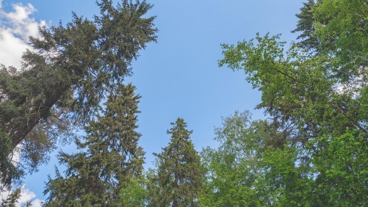 «Влезьте на дерево и оцените обстановку»: в МЧС Прикамья рассказали, как спастись от лесного пожара