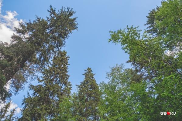 Сейчас разводить костры в лесах запрещено