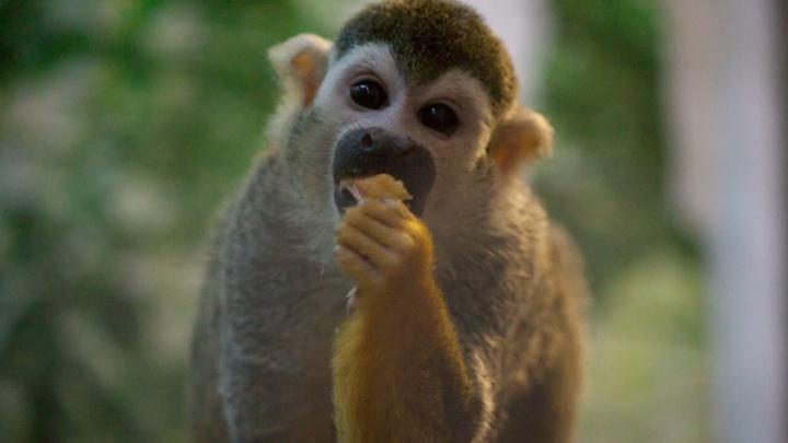 В челябинском зоопарке обезьян отправили на карантин из-за коронавируса