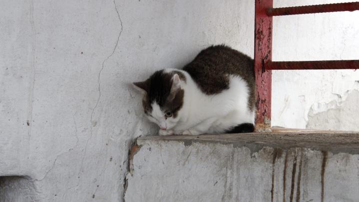 «Увижу в подъезде — скину с третьего этажа»: в Берёзовском мужчина угрожает школьнице из-за кастрации кота