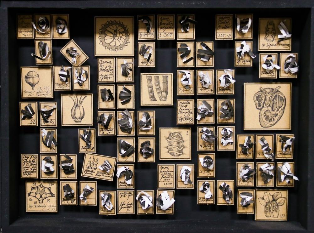 Музей чепухи, из 16 коробок, коробка 30х40 см, бумага, тушь, энтомологические булавки, 2020