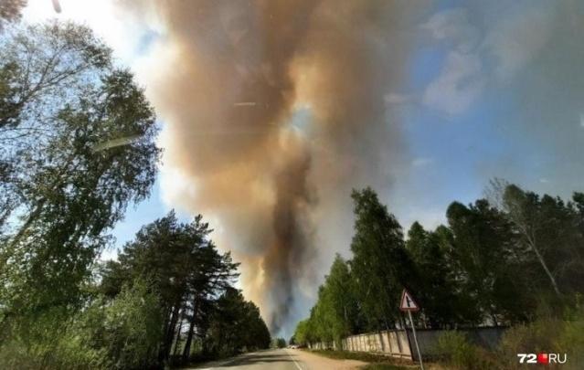 Пожар у озера Андреевского тушили полтысячи человек