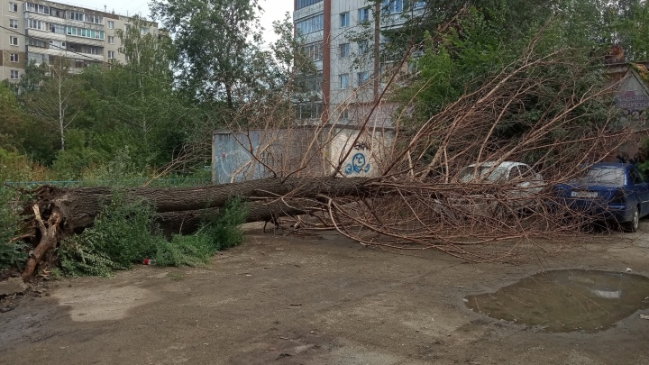 В Челябинске дерево рухнуло на машины, а в Магнитогорске — разбило окна в многоэтажке