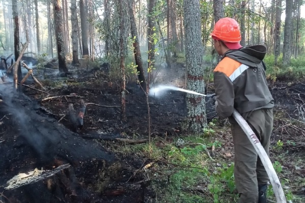 Жара и длительная сухая погода приводят к возникновению огня в лесах