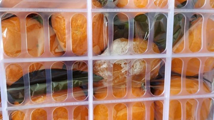 В Самарской области задержали две фуры с китайскими мандаринами и помело