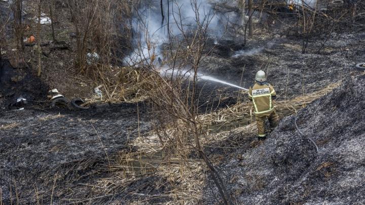 Под Волгоградом сразу в нескольких местах загорелась Волго-Ахтубинская пойма