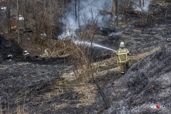 По данным онлайн-сервисов, огонь прошел по 58 квадратным километрам Волго-Ахтубинской поймы