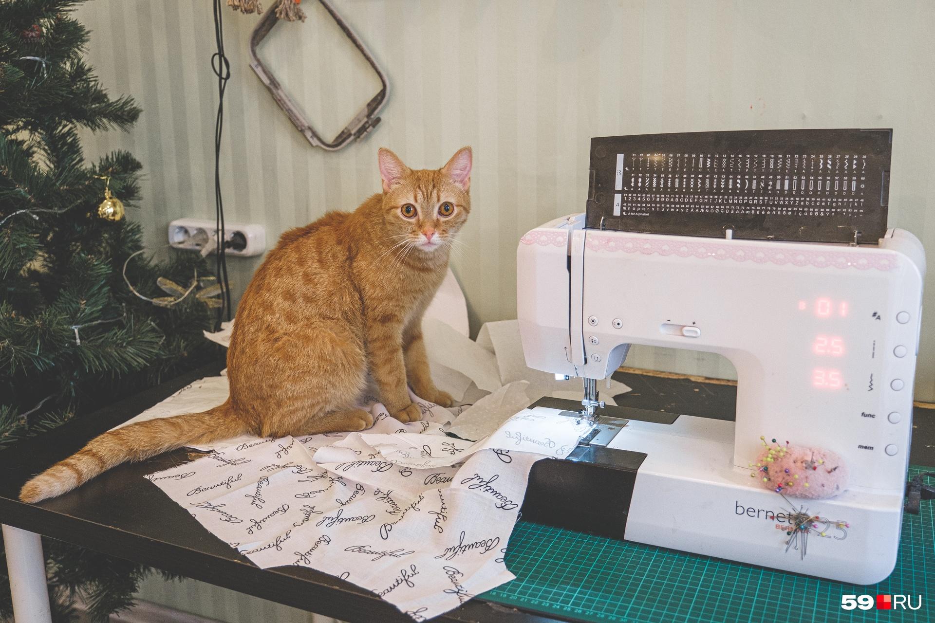 Кот часто любит наблюдать за тем, как работает Танзиля