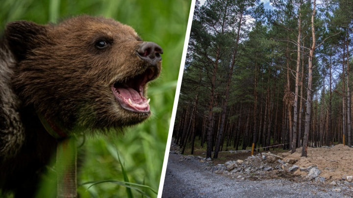 Сейчас они худые и голодные: медведица с медвежонком вышли к охотникам в Новосибирской области