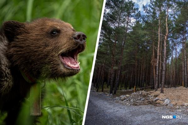 Сейчас медведи в лесах худые и голодные