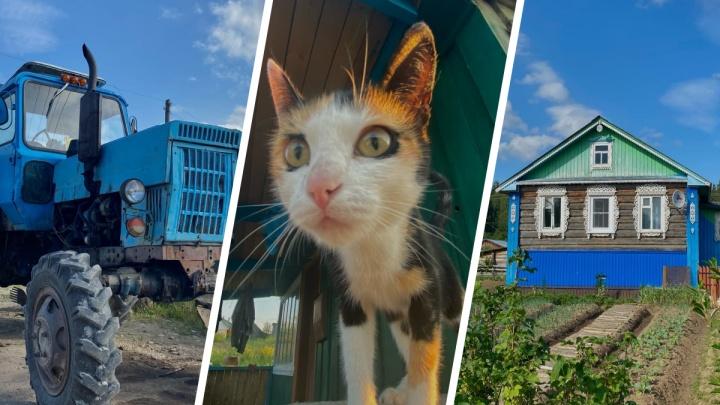 Онлайн-билет на сельский курорт: фоторепортаж из Плесецкого района, после которого хочется в деревню