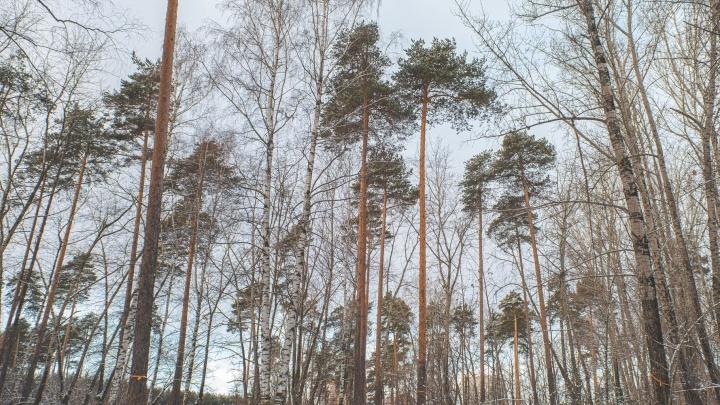 Нас спрашивали — мы отвечаем: кто из пермских депутатов проголосовал против повышения этажности в Черняевском лесу