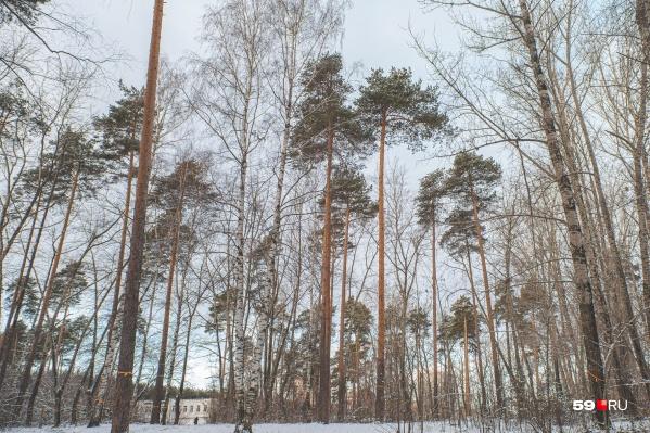 Жители Паркового гуляют и занимаются спортом в Черняевском лесу, поэтому многие выступают против его застройки