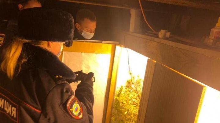 В Нижнем Тагиле парень арендовал гараж, устроил в нем наркоферму и выращивал марихуану