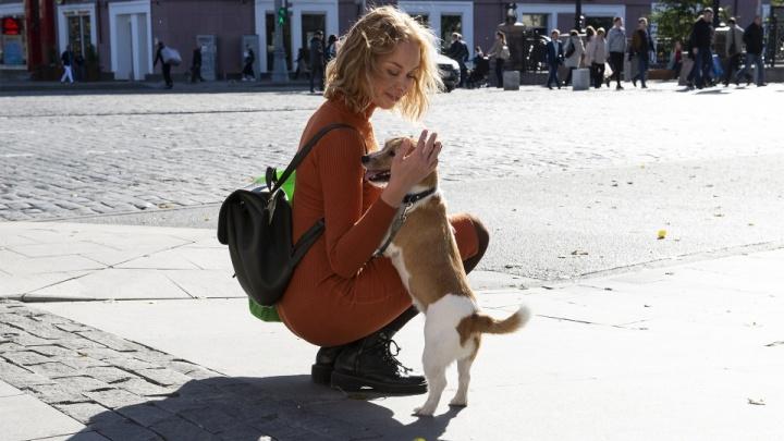 В Кургане появятся новые площадки для выгула собак
