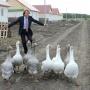 «Нас монотонная работа угнетает»: почему в России стало некому трудиться на земле