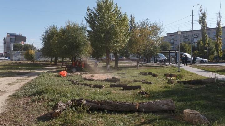 Спилили и сухие и зеленые: в центре Волгограда вырубают остатки сквера