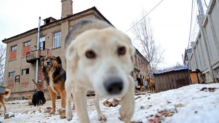В Уфе бродячие собаки испугали детей неподалеку от школы