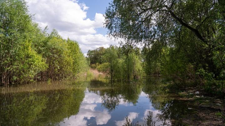 Река-оборотень: путешествие с НГС по берегу реки со своими фавелами и лесом (сами вы вряд ли там погуляете)