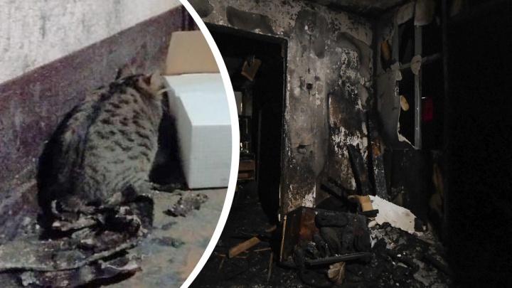 В Екатеринбурге ищут котика, выжившего в пожаре на ЖБИ. Он лишился хозяев