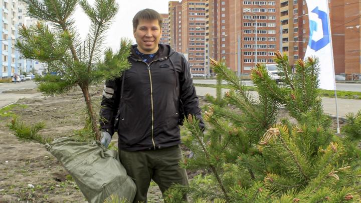 Новосибирцы высадили 300 сосен в микрорайоне на левом берегу