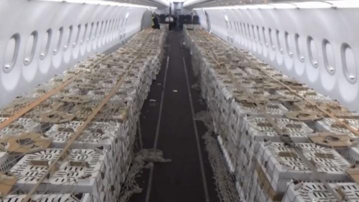 Спецборт для испанских цыпочек: «Уральские авиалинии» выделили целый самолет для птиц
