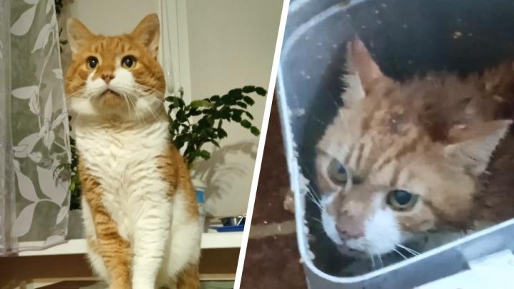 В Северодвинске многодетная мать замучила насмерть кота: что об этом известно и какое наказание ей грозит